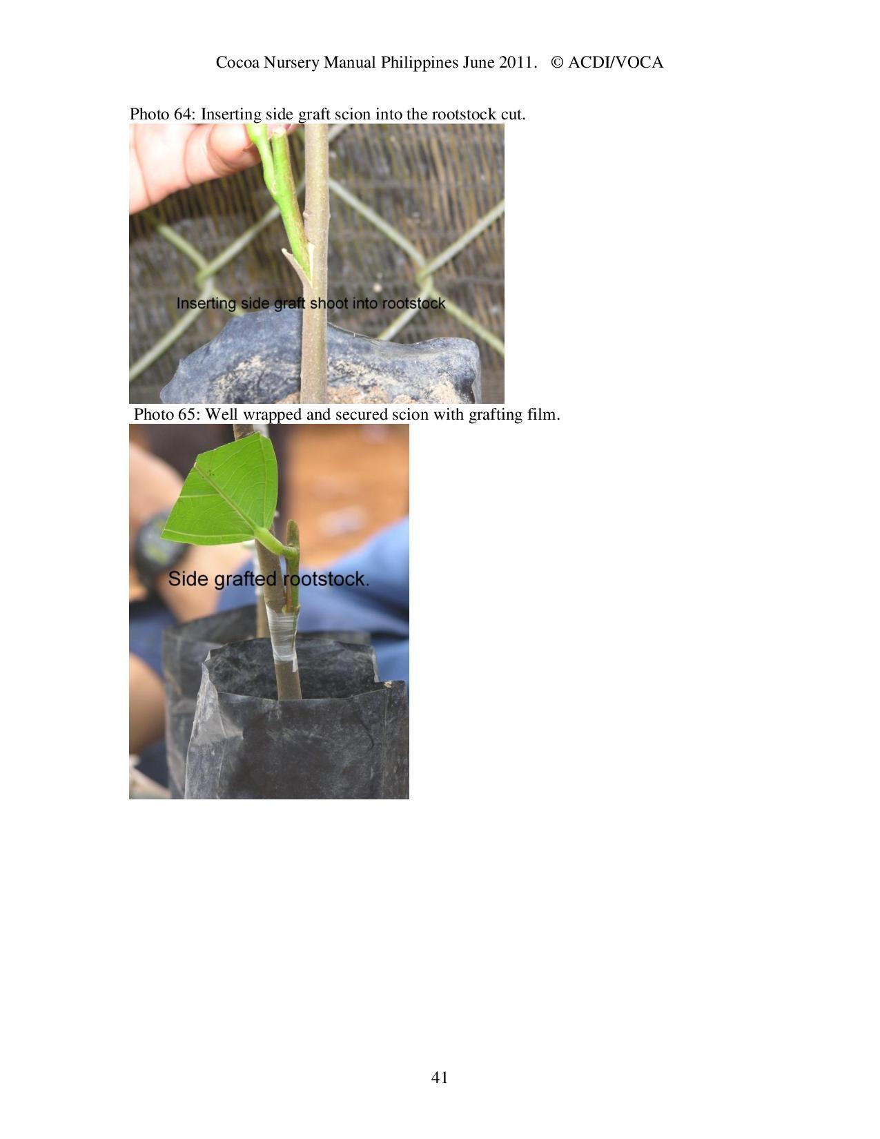 Cocoa-Nursery-Manual-2011_acdi-voca-page-041