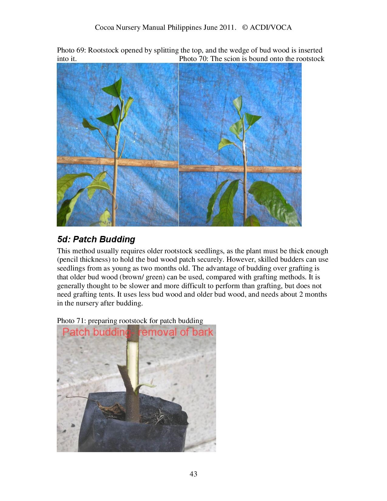 Cocoa-Nursery-Manual-2011_acdi-voca-page-043