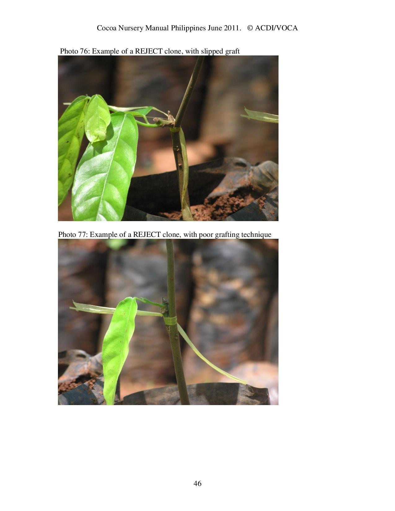 Cocoa-Nursery-Manual-2011_acdi-voca-page-046