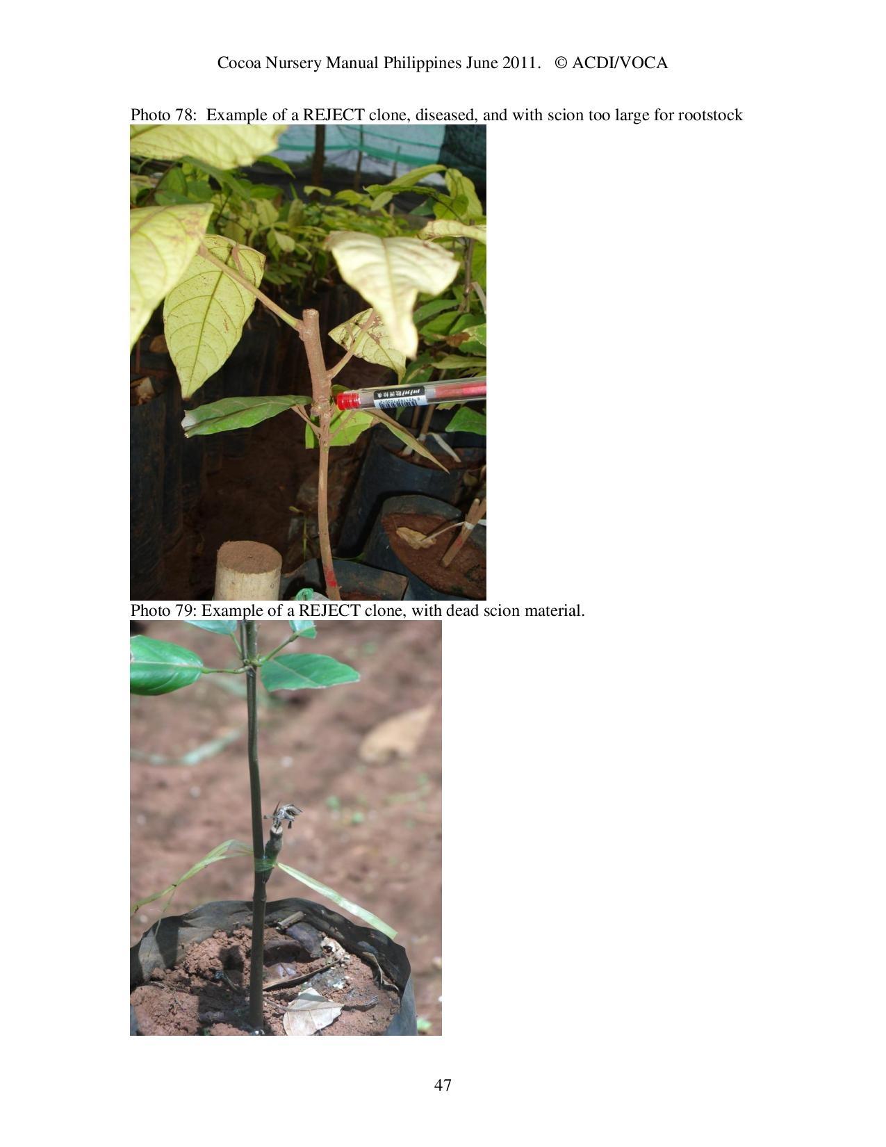 Cocoa-Nursery-Manual-2011_acdi-voca-page-047