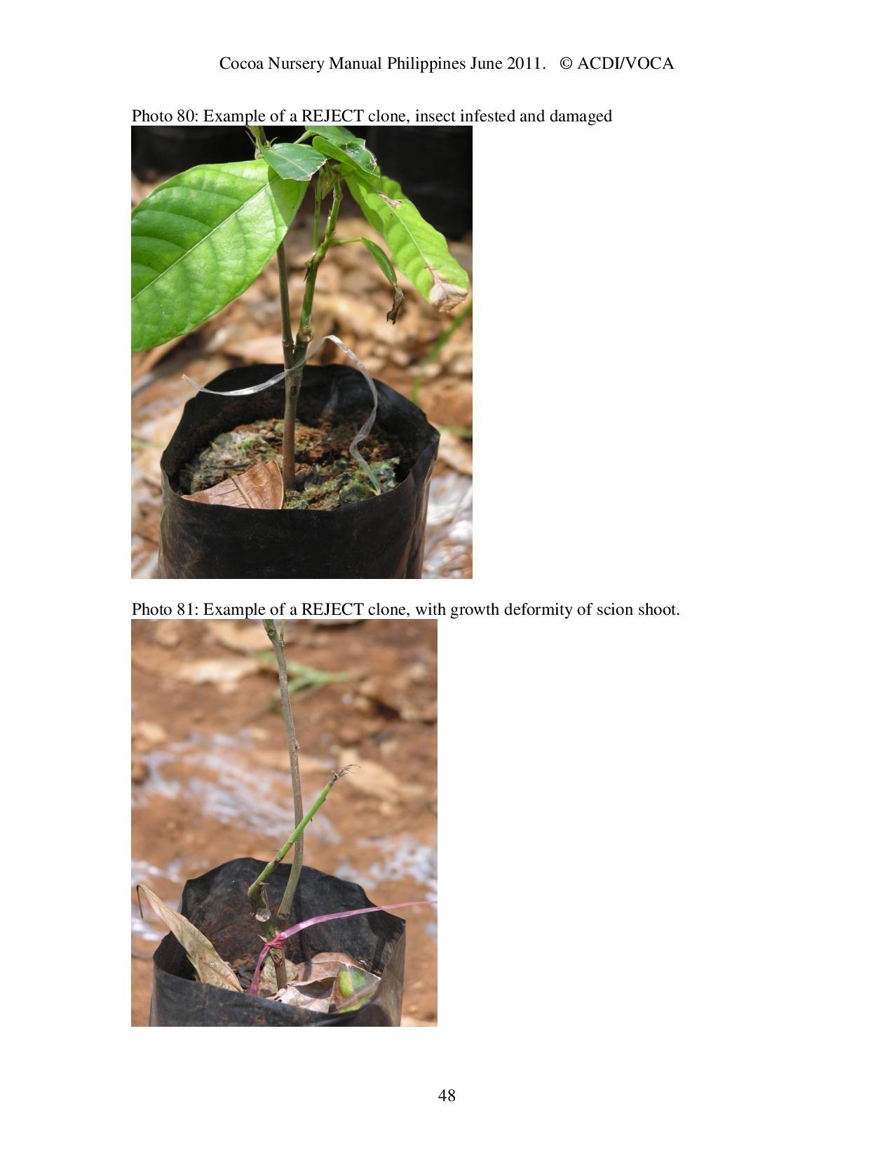 Cocoa-Nursery-Manual-2011_acdi-voca-page-048