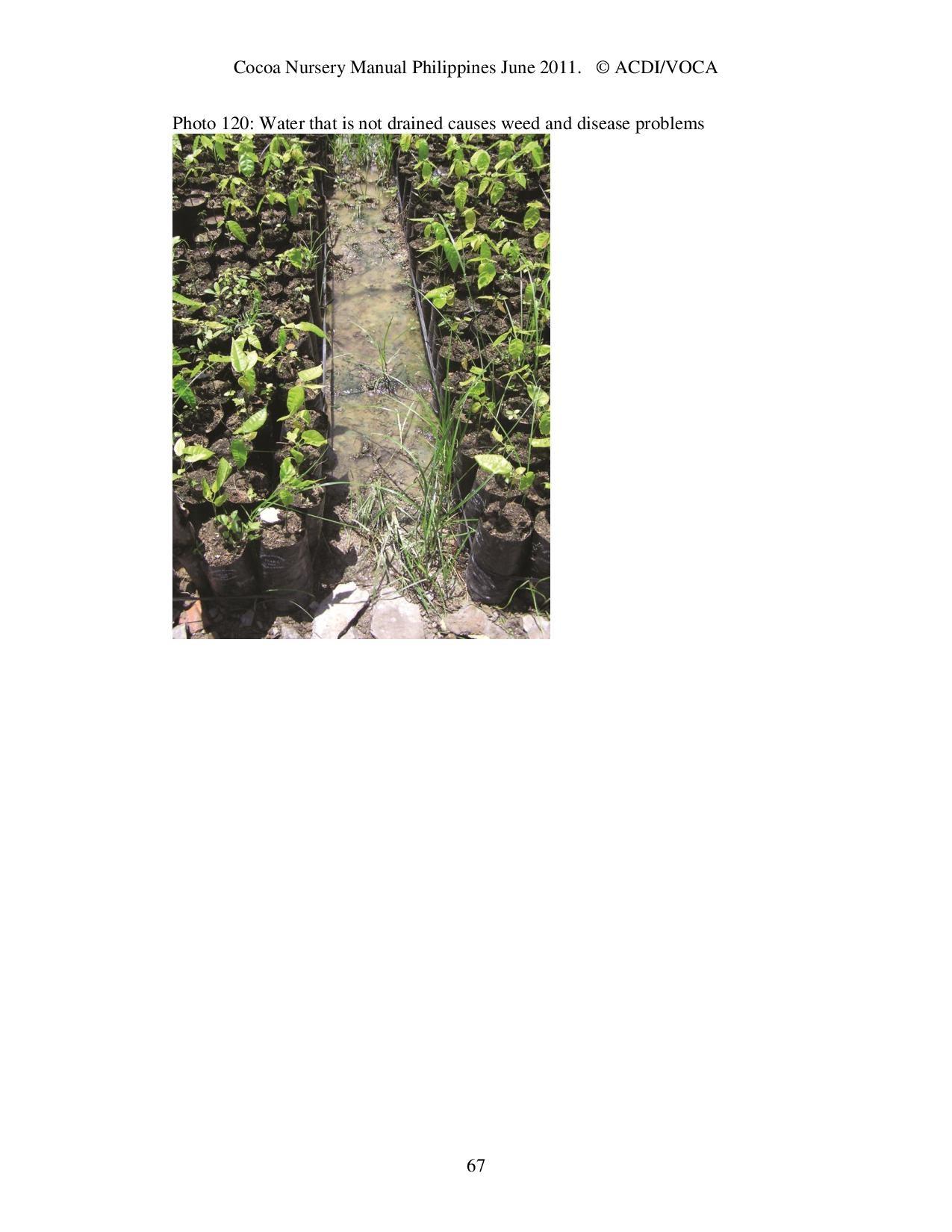 Cocoa-Nursery-Manual-2011_acdi-voca-page-067