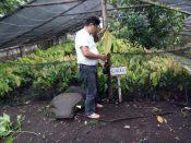 CYRUS O. Cultivar, Camarines Sur